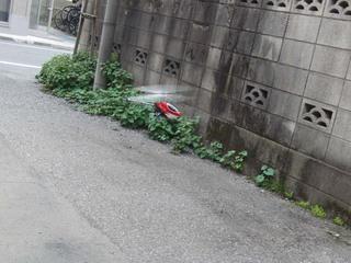 20110703_3.jpg